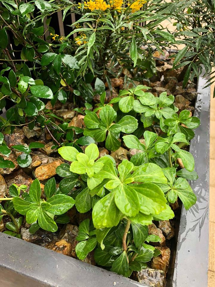 竣工祝いの鉢植え植栽(壁面緑化)~看護小規模多機能型居宅介護施設と住宅型有料老人ホームの植栽~
