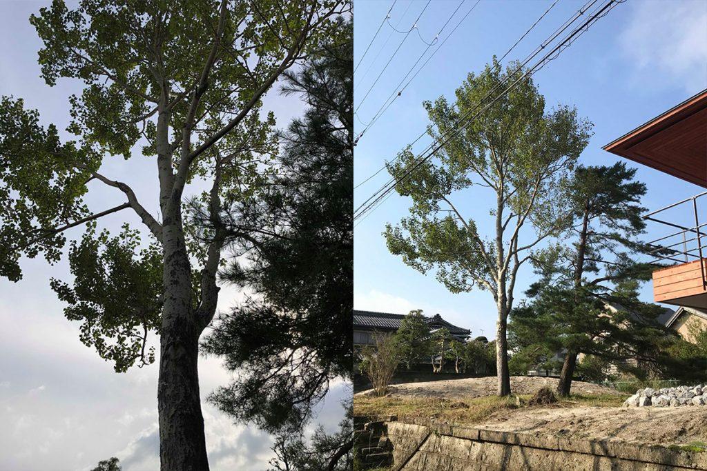 自然樹形の木々は素晴らしい/J邸(滋賀県大津市)